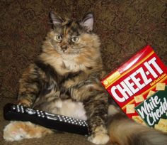 cat and cheez- it